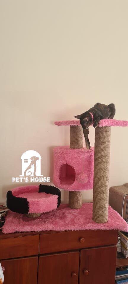 Cây leo cho mèo